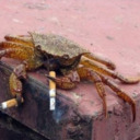 Smoking Crab's Avatar