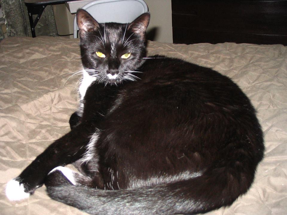 KC Kitties's Avatar