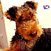 terriergal's Avatar
