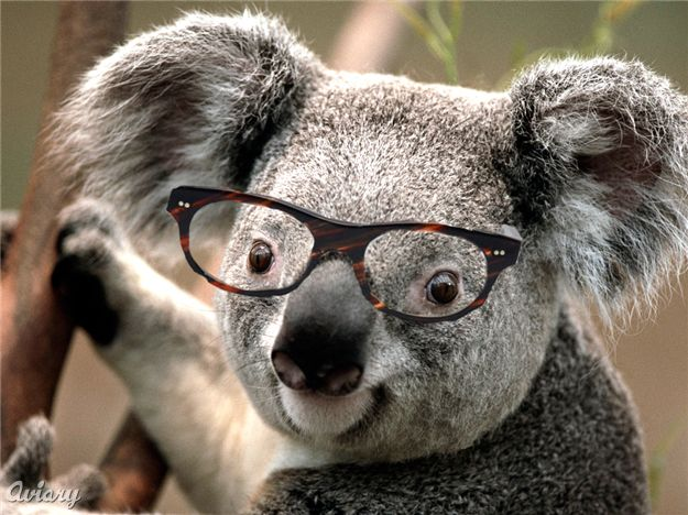 Bookish Koala's Avatar